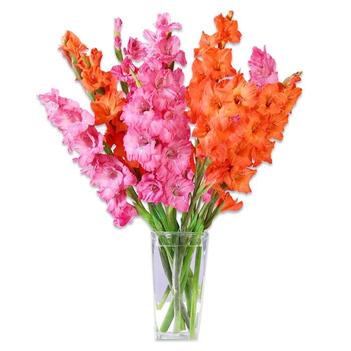 Pink & Orange Gladiolas