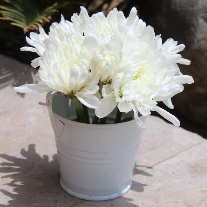 Calming Grace Peace White Daisies in a Bucket
