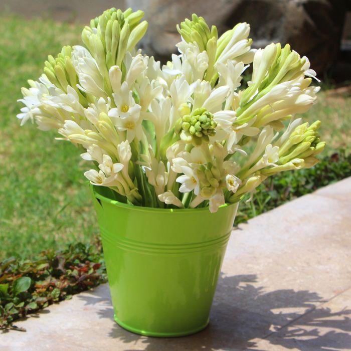 The Sweet Splendor-Tube Roses in a Bucket