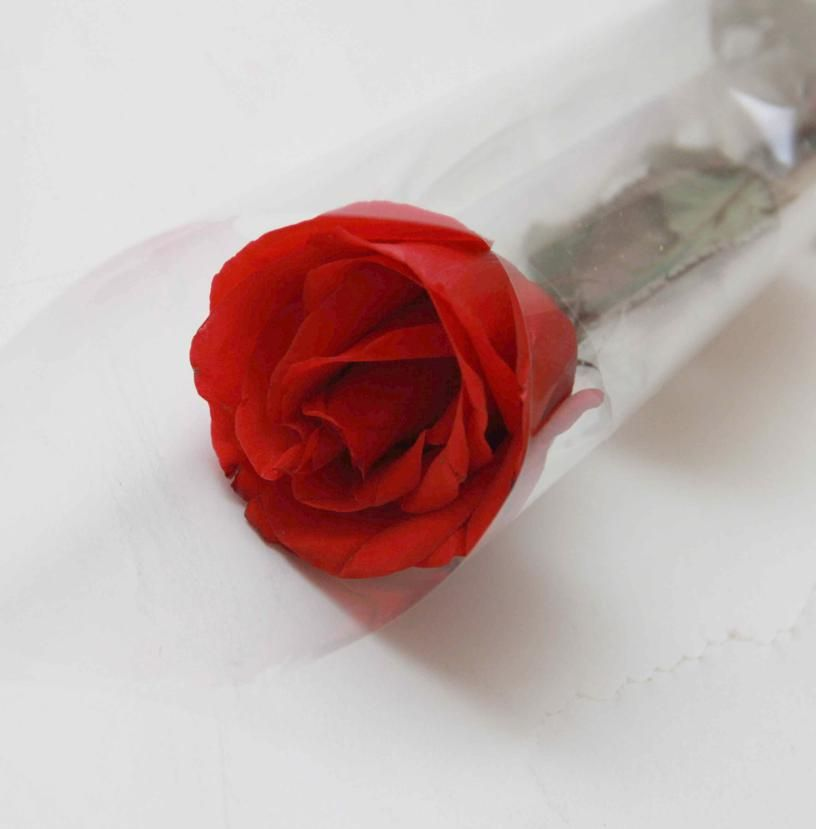 Single Stem Imported Red Rose in a Box