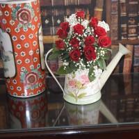 Rose Delight in Garden Pot