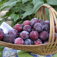 Healthy Plums Basket